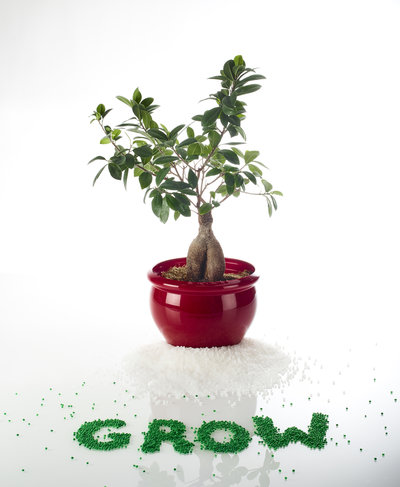 GROW bonsai adhesive